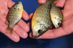 3 fish-113